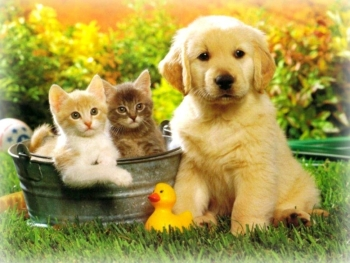 Cucciolabile: cuccioli di cane, gatti e paperella